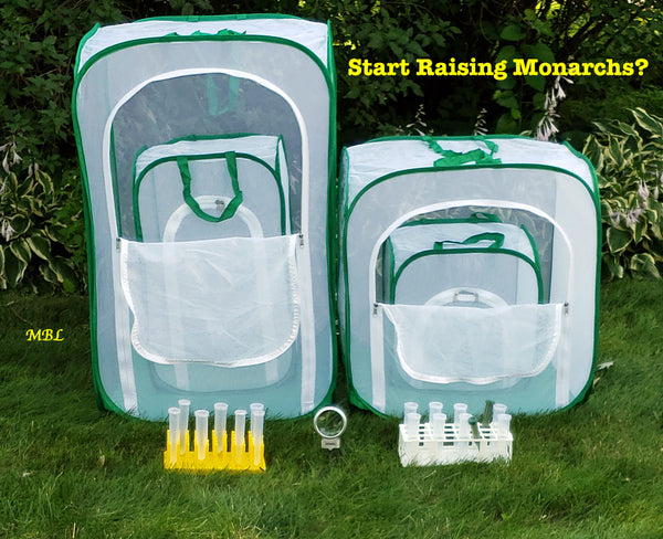 Pop Up Mesh Butterfly Cages- Which size caterpillar cage fits your raising butterflies needs?
