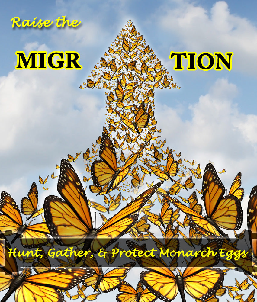 How to Hunt, Gather, and Protect Monarch Eggs- Raise The Migration