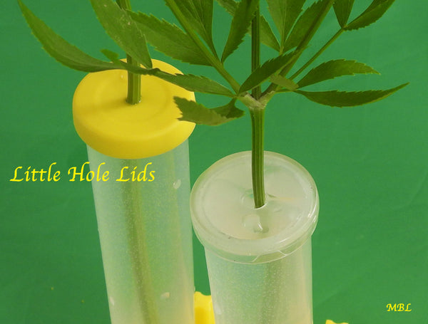 Little Hole Lids for Small Milkweed Cuttings and Leaf Cuttings. Prevent Baby Caterpillar Drownings