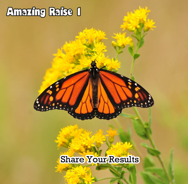 Raise The Migration 1 Results- Share Your Results Releasing Monarchs for the 2013 Monarch Migration