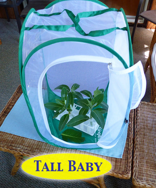 Tall Baby Butterfly Cage Giveaway