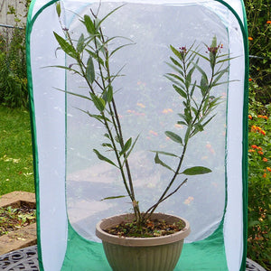 Monarch Tower Butterfly Cage- Raise Caterpillars on Large Milkweed Cuttings or Potted Plants