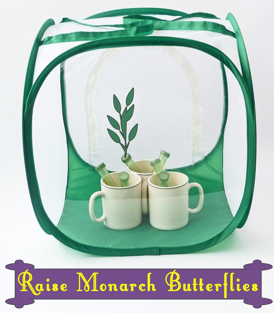 Baby Cube Butterfly Cage with Floral Tubes for Milkweed Cuttings