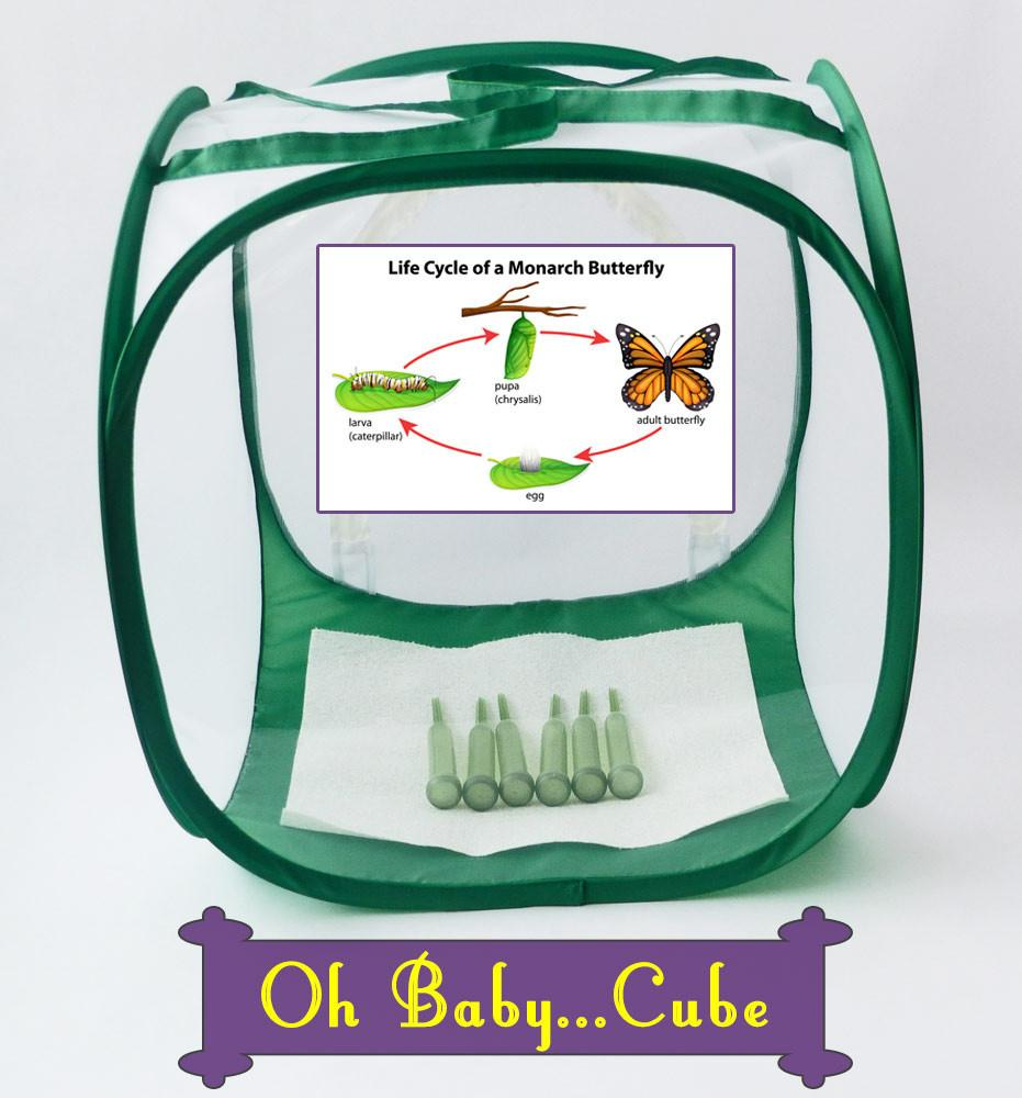 Baby Cube butterfly Cage for Raising Monarchs through the entire Butterfly Life Cycle