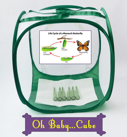 Baby Cube Butterfly Cage- Raise Monarch Butterflies