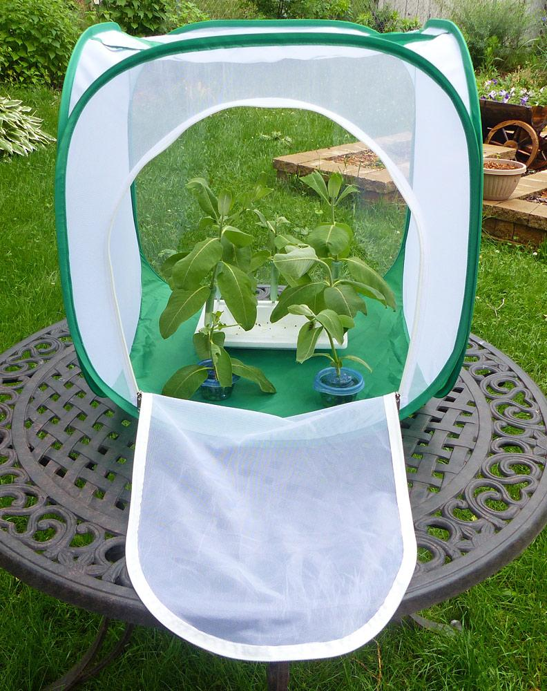 Big Cube Butterfly Cage- Raise Monarch Butterflies from Eggs or Caterpillars