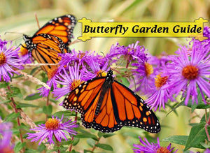 Butterfly Garden Book Download