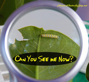 Adjustable LED Magnifier- See Tiny Eggs and Baby Caterpillars