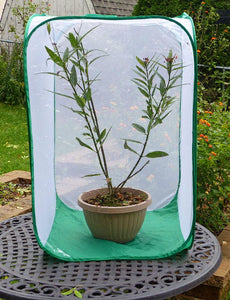 "Monarch TOWER Butterfly Cage w/ Window- Raise Monarchs on Milkweed Plants 24""x24""x36""H"