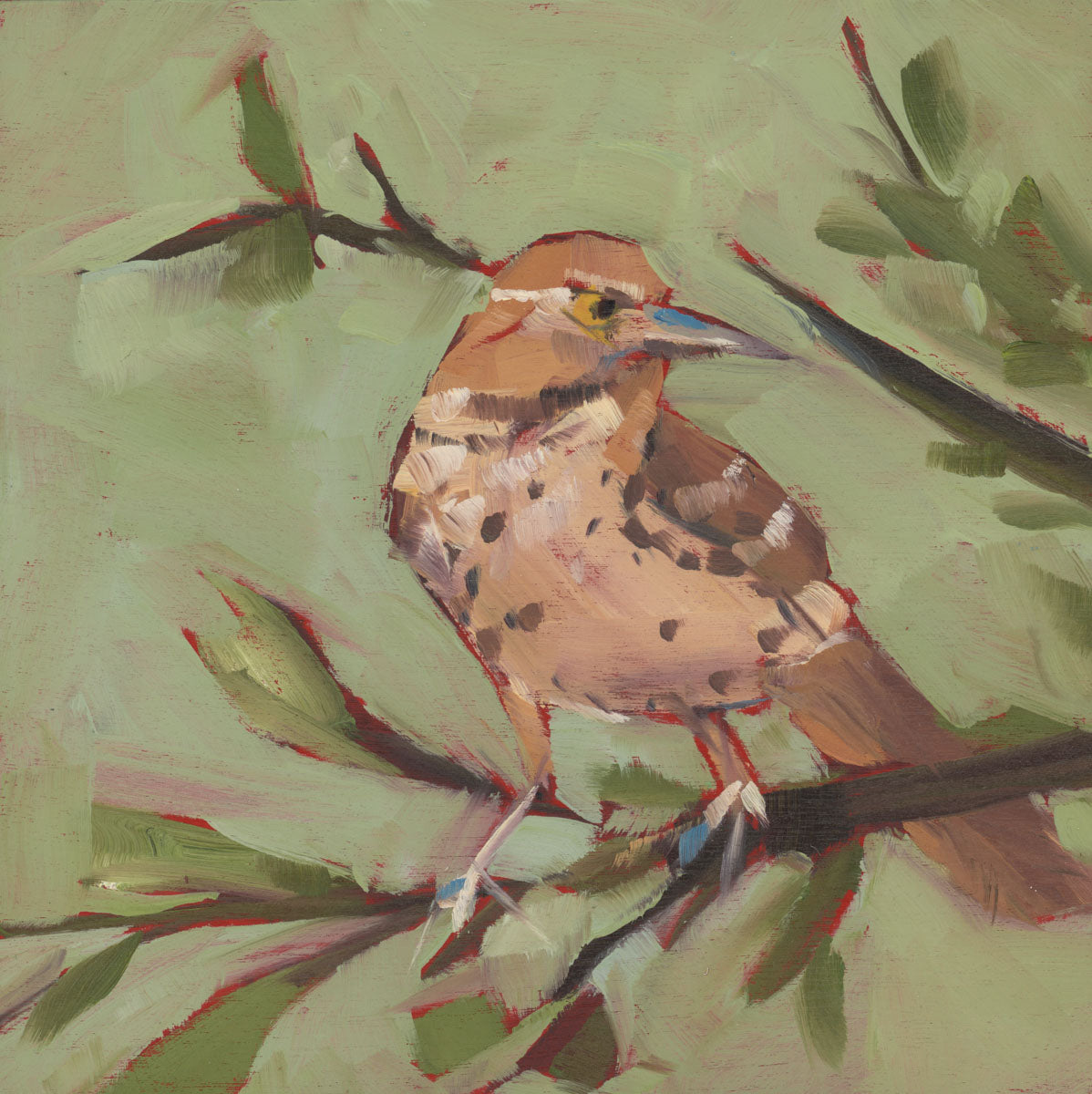 1384: Brown Thrasher on the Watch