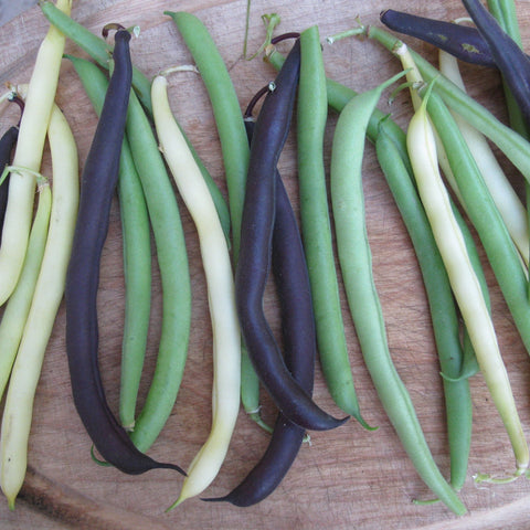 Mélange de haricots nains / Snap Bush Bean Mix
