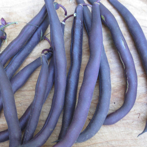 Royal Burgundy Purple Bush Bean