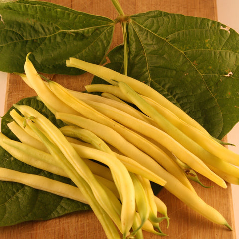 Gold Rush Yellow Bush Bean