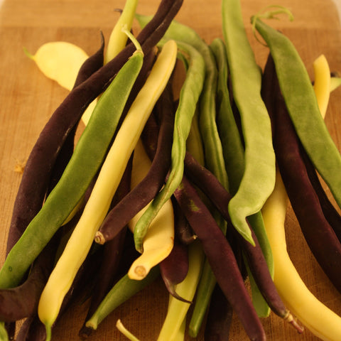 Mélange de Haricots Grimpants / Snap Pole Bean Mix