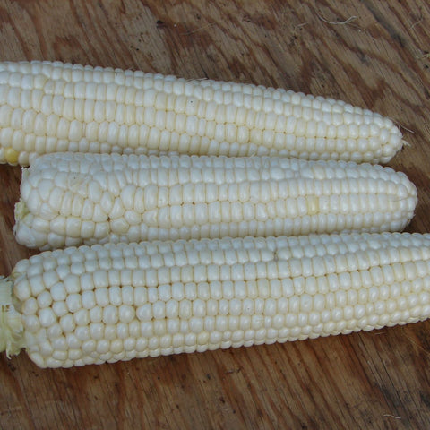 Tuxana Sweet Corn