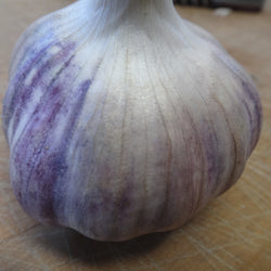 Korean Purple Rocambole Garlic Bulbs