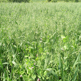 Oats And Peas Mix - Cover Crop