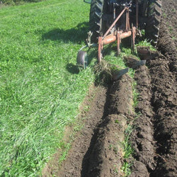"""Soil Builder"" pasture mix, 100% certified organic - Cover Crop"