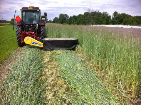 Fall Rye And Hairy Vetch Mix, certified organic - Cover Crop