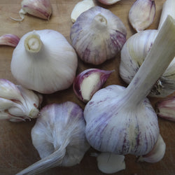 Garlic Taster Pack