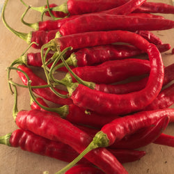 Piment Fort / Hot Pepper - Red Rocket