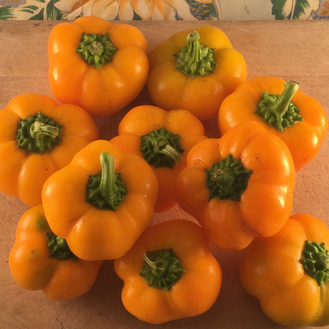 Doe Hill Sweet Pepper