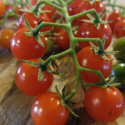 Matt's Wild Cherry Red Tomato