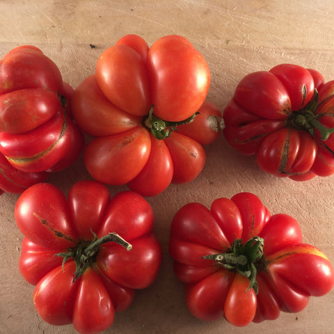 Reisetomate Red Traveller Tomato