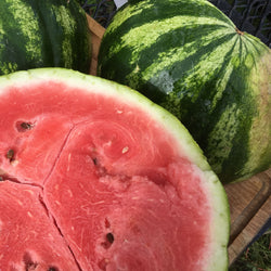 Melon d'eau / Water Melon - Sweet Dakota Rose