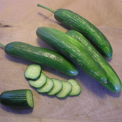 Super Zagross Lebanese Cucumber