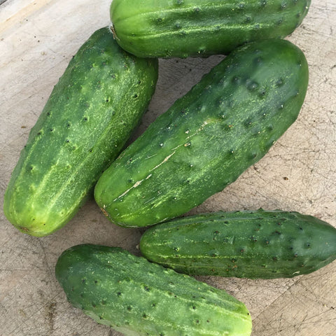 Concombre / Cucumber - National Picking