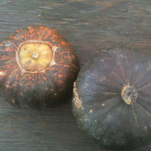 Uncle David's Dakota Dessert Buttercup Squash