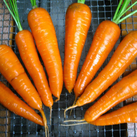 Red Cored Chantenay Carrot