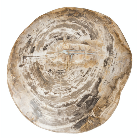 Riley Petrified Wood Accent Table- Medium - Chapin Furniture