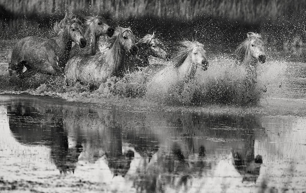 Group of Horses Running in Water Black and White Photography | Art Shows NYC | Ejaz Khan Earth