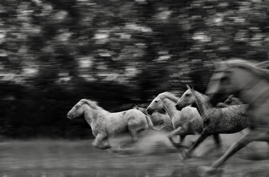 BEST HORSE PHOTOGRAPHY IN MOTION TIMING EJAZ KHAN EARTH