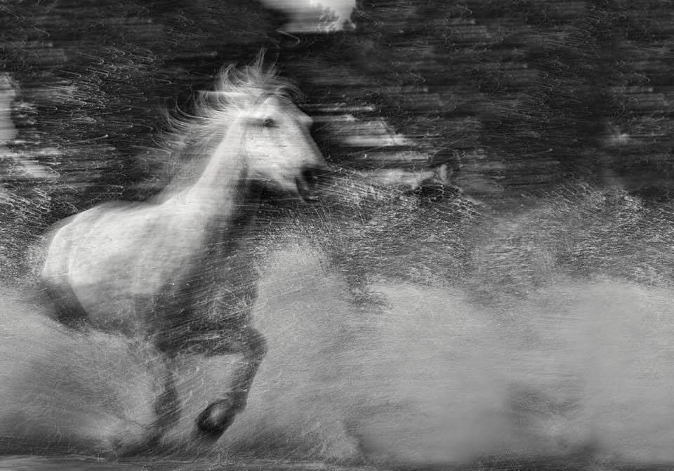 White Horse Picture Art by Wildlife Photographer Ejaz Khan