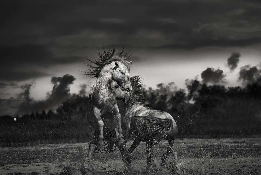 HORSE PHOTOGRAPHY | THE MUSTANGS