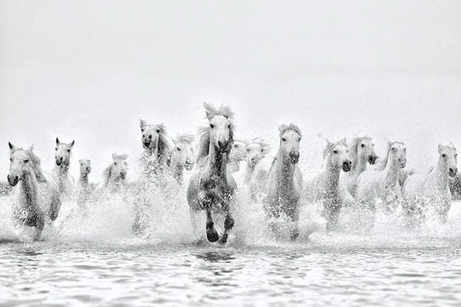 Black and White Photo of Horses Running In Water | Open to Public Exhibits in NYC | Ejaz Khan