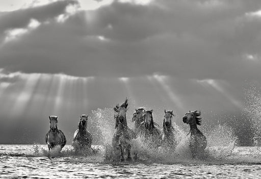 Picture of Horses Running Forward with Sun Rays Photo By Ejaz Khan 2018