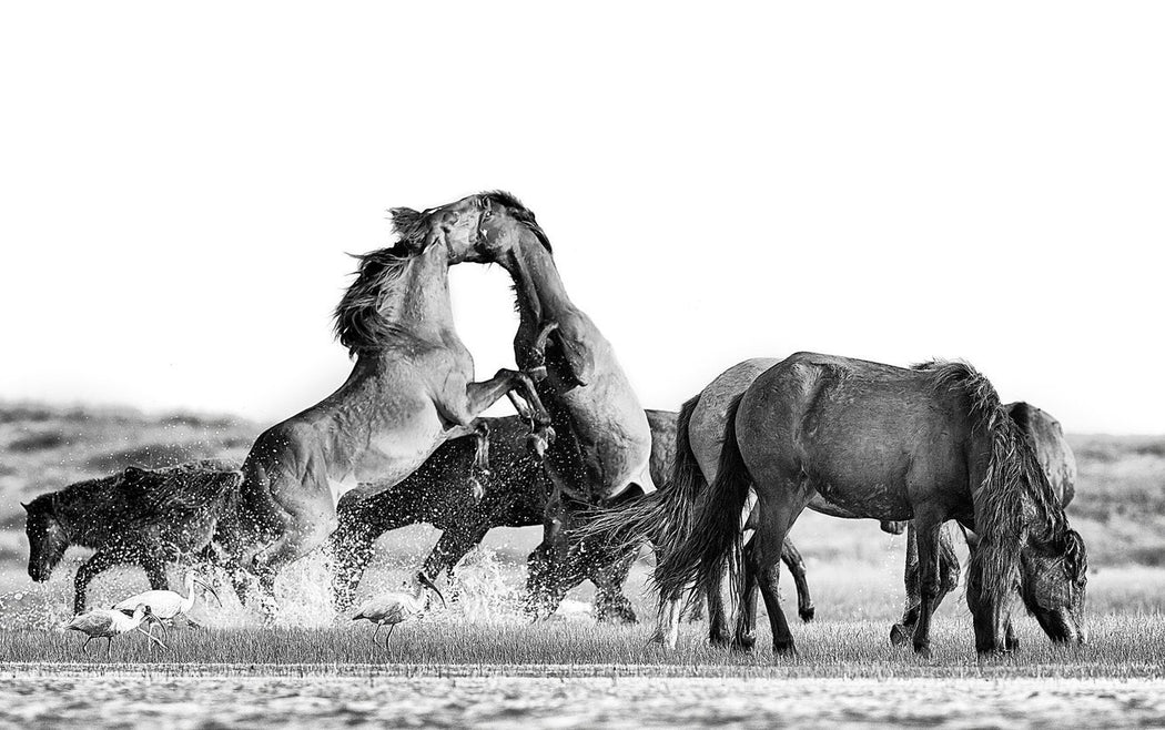 Fighting Horse Pics by artist Ejaz Khan
