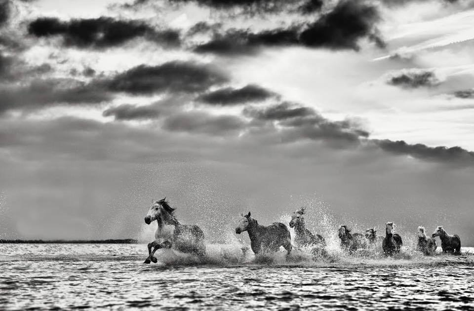 HORSES RUNNING BLACK AND WHITE PHOTO - EJAZ KHAN EARTH
