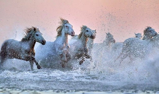 WILD HORSES RUNNING - COLOR PHOTOGRAPHY - EJAZ KHAN EARTH