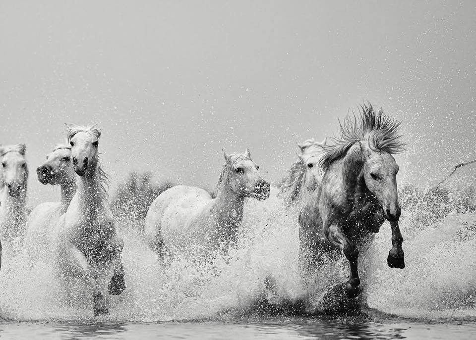 Love Horse Photo | Best Online Art Gallery of Equine Black and White Photos by Ejaz Khan Earth