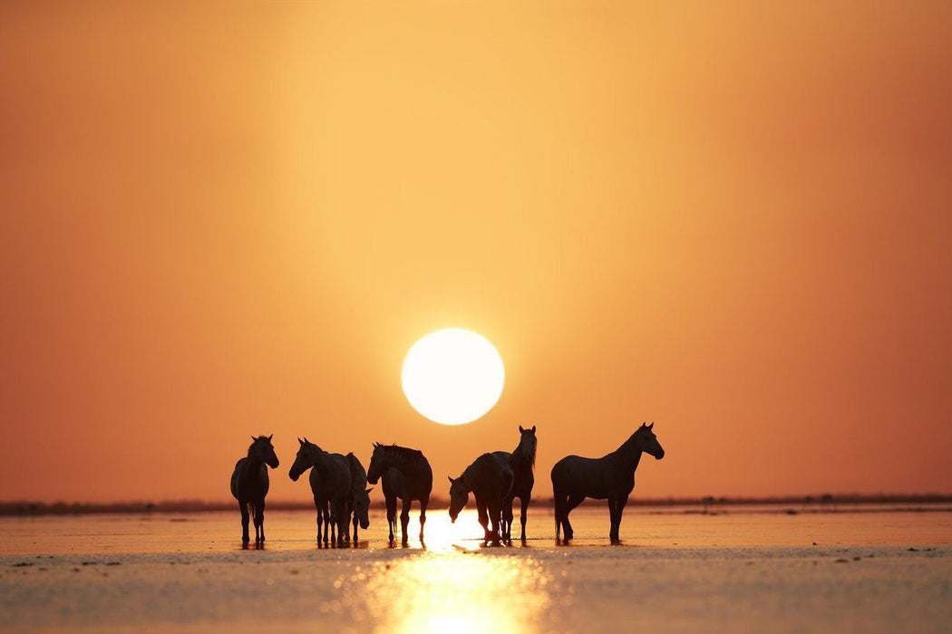 Horse Picture with Orange Sunset | Online Art Gallery | Ejaz Khan Photography