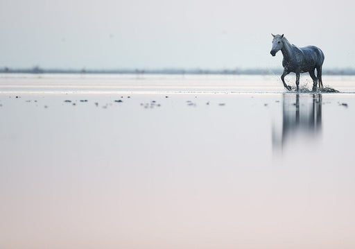 Lone Horse Photo in the Water | Limited Edition Photo Gallery by Ejaz Khan Aug 2018