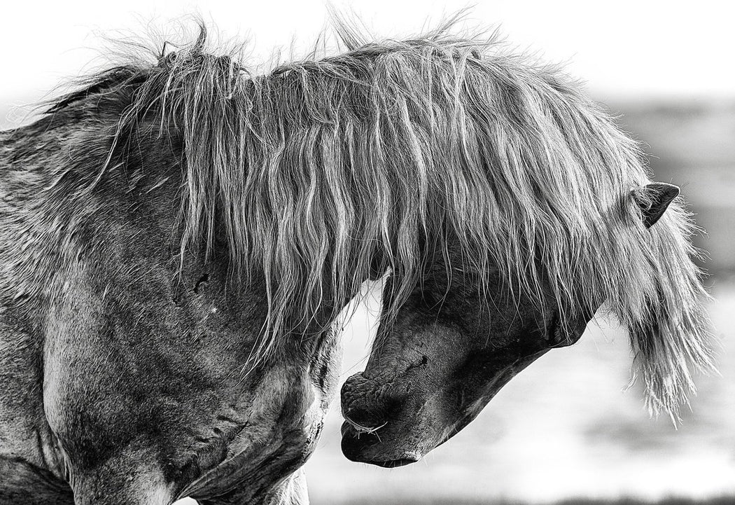 Up Close Horse Photo by Wildlife Artist Ejaz Khan