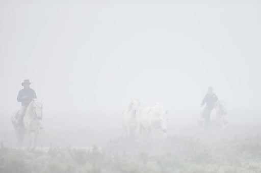 Riding Horses in the Mist Photo | New York Museums | Photographer Ejaz Khan