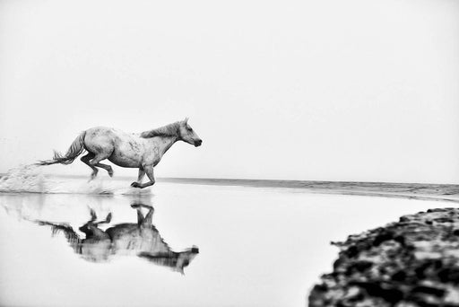 Running Horse in Water | Black and White Photography Art Prints By Ejaz Khan