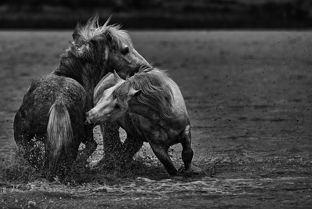 TWO WILD HORSES PHOTOGRAPHY - EJAZ KHAN EARTH